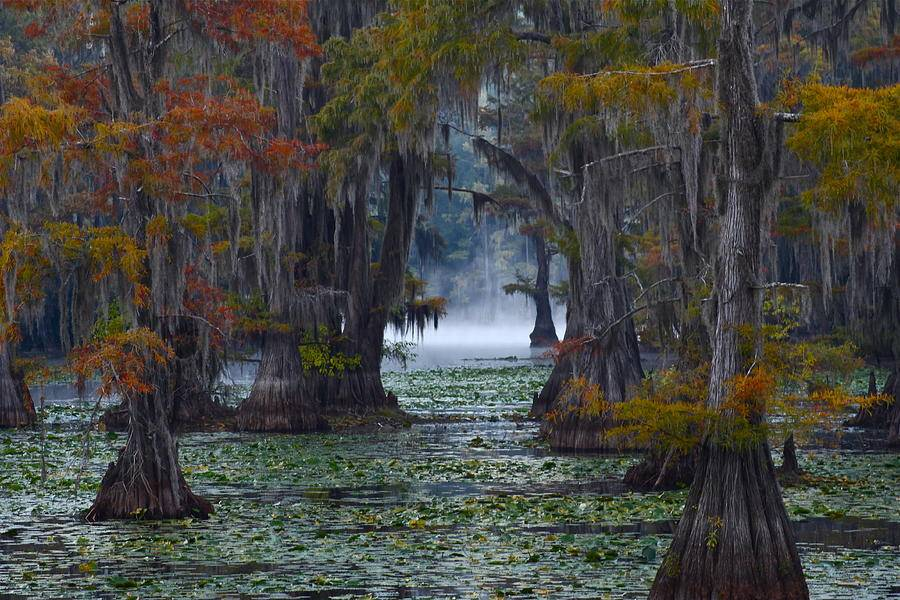 Bensozia Today Place Daydream Caddo Lake