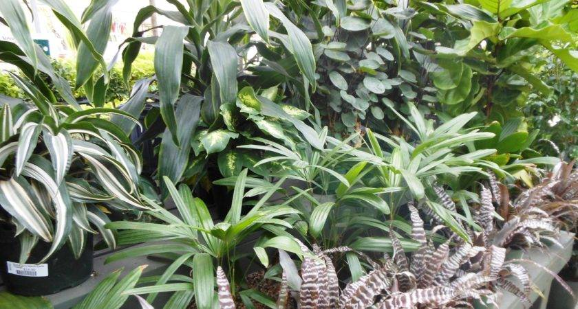 Best House Plants Healthy Home