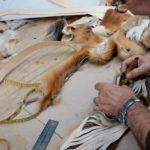 Canada Wild Fur Trade Returns Jazeera America