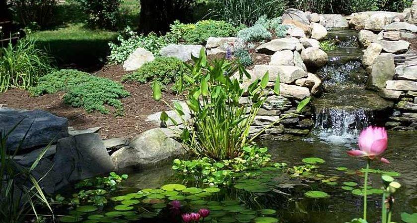 Garden Ponds Water Features Gardens