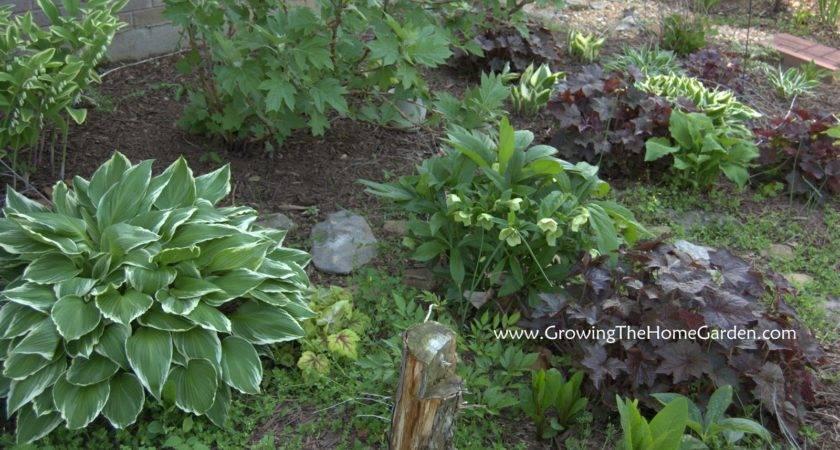 Garden Shade Ideas Native Design