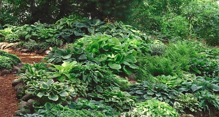Garden Shade Ideas Perfect Home Design
