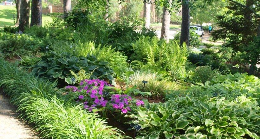 Gardens Ideas Shades Plants Outdoorsbackyard Bliss Hosta