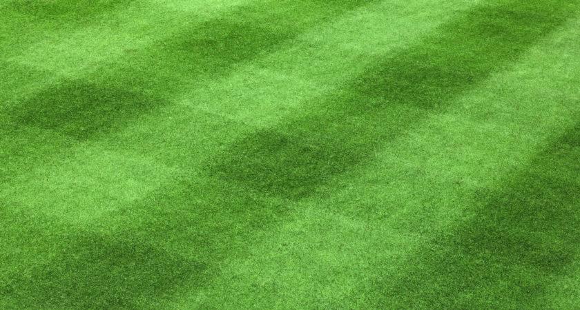 Golf Green Grass Pattern Fazio Fertilizer