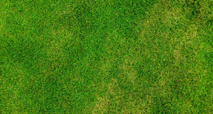 Grass Jun Field High Collections Texture