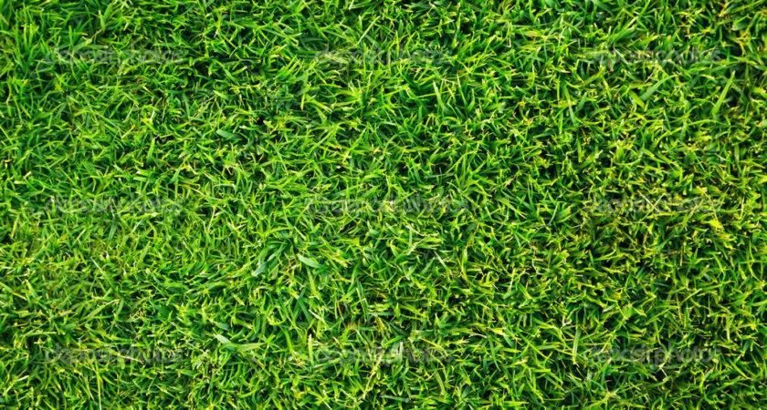 Green Grass Pattern Mustang