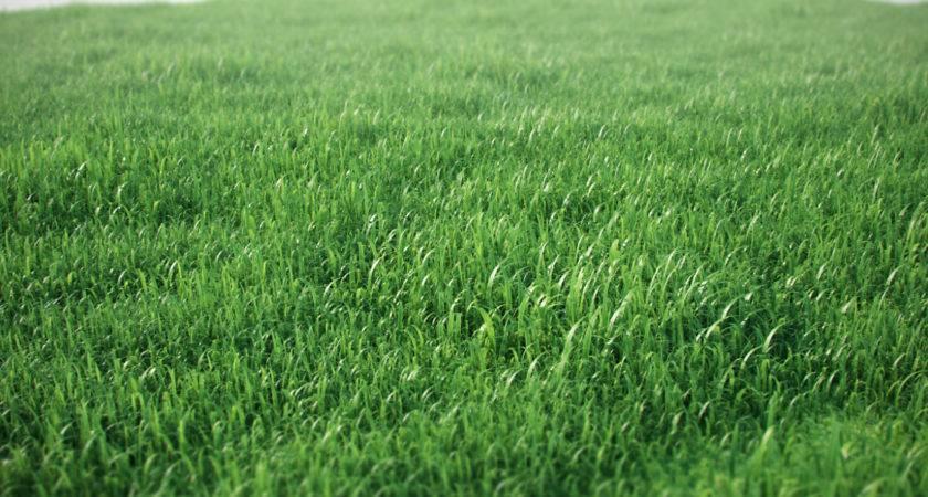 Ground Patterns Grass Josef Bsharah