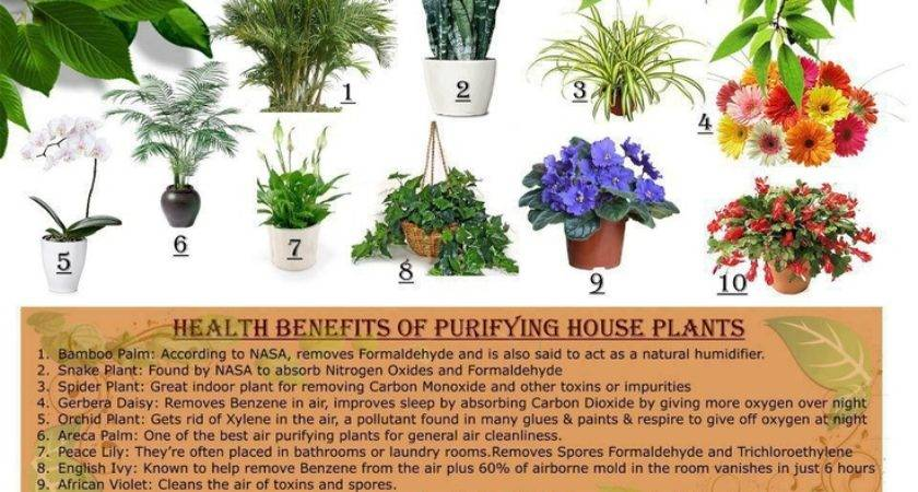 Health Benefits Purifying House Plants Created Living Healthy