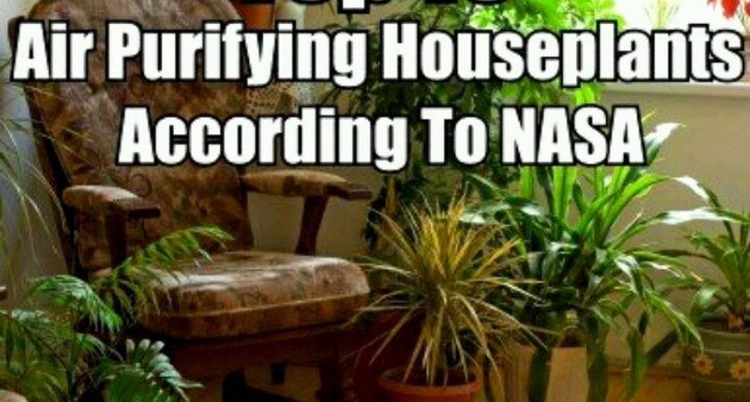 Healthy House Plants Home Pinterest