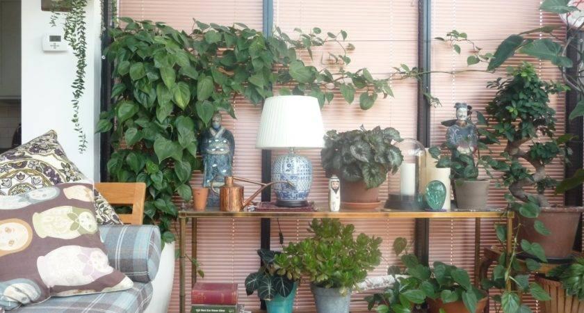 House Plants Enduring Gardener