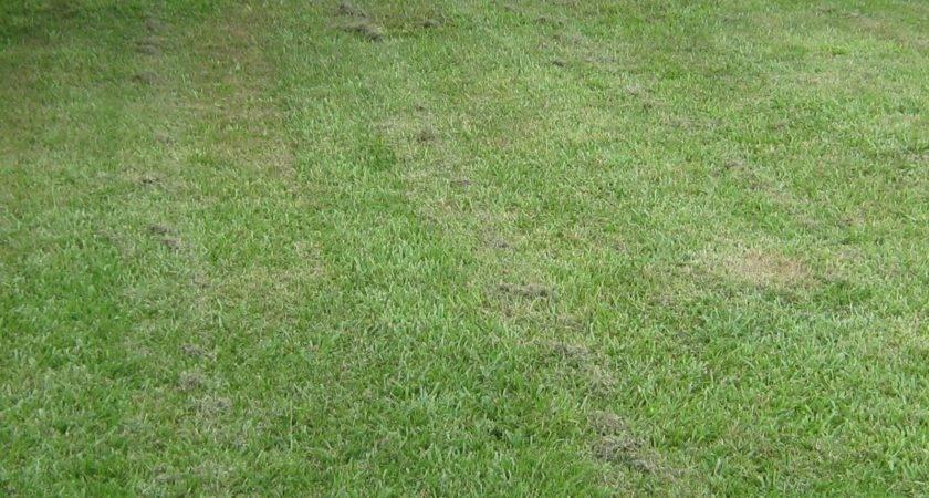 Lawn Cutting Patterns