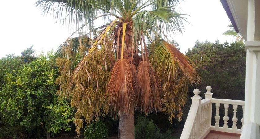 Palm Trees Newstar Homes Spain