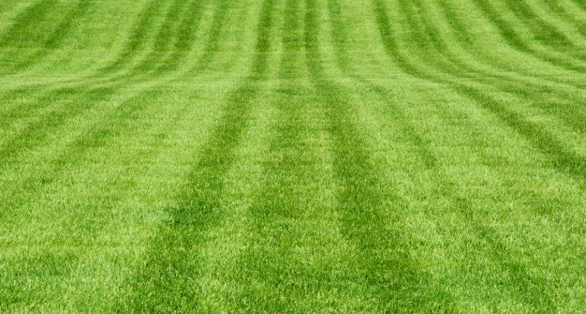 Secret Great Lawn Aeration Top Dress Overseed