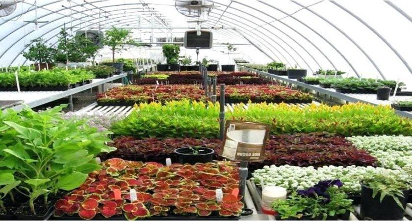 Utah Plant Nursery Your Garden Resource Center